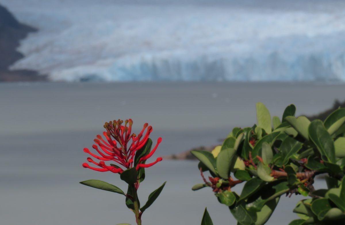 L'autre versant de la Patagonie (de El Chalten à Puerto Natales)