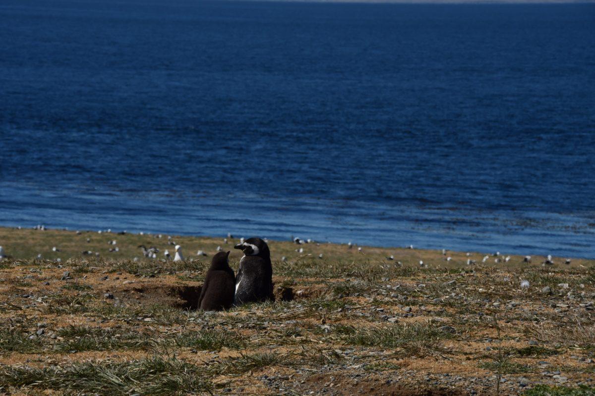 On est toujours le pingouin de quelqu'un