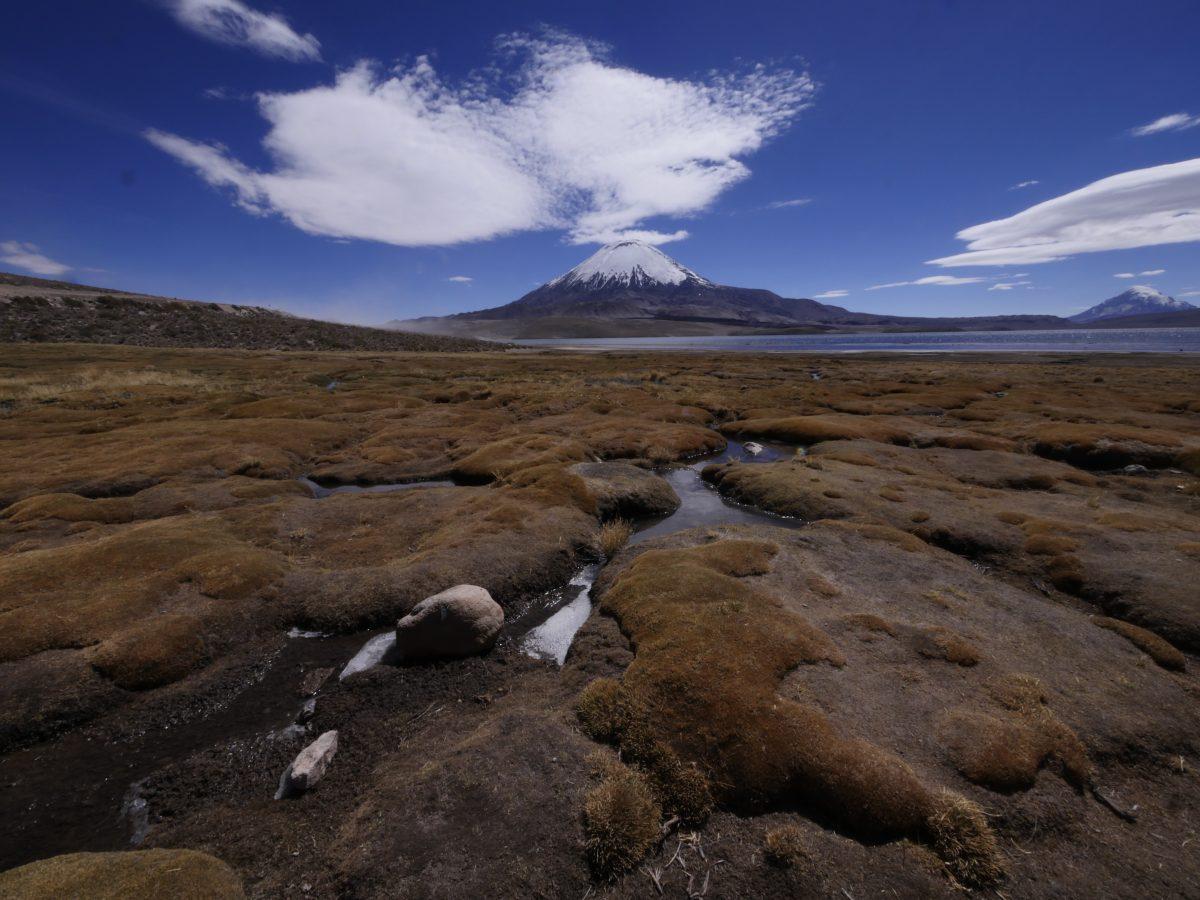 De Putre à Colchane, les charmes discrets de l'altiplano